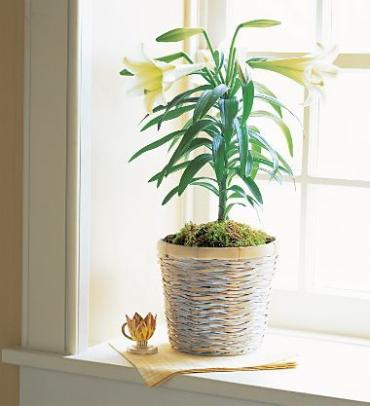 Easter Lily Basket with moss