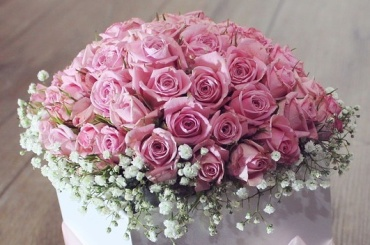 Four-dozen Pink Roses, Compact