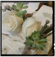 White Rose Boutonniere with Brunia & Succulent
