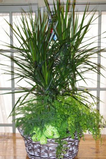 Ides of March Plant Basket