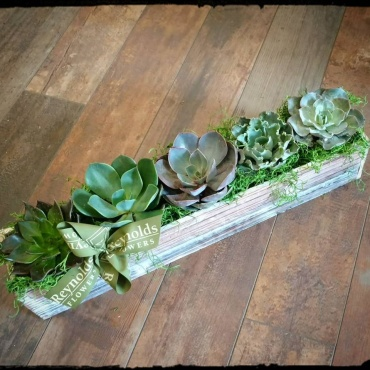 Succulent Tray Wood Box