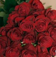 18 Red Roses Box Boxed (dozen & a half roses)