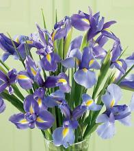 Iris Splendor Bouquet, boxed
