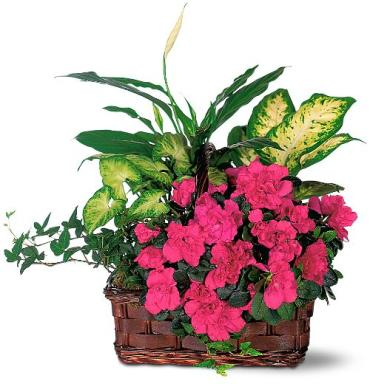 A Blooming Attraction Garden Basket