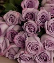 Lavender Roses, 18 boxed